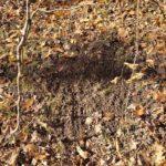 Deer scrapes!